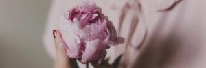 Parlez-moi d'amour - 3 - La rose